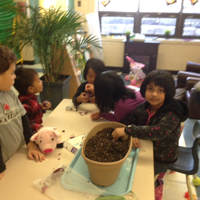 Planting bulbs and watching them grow